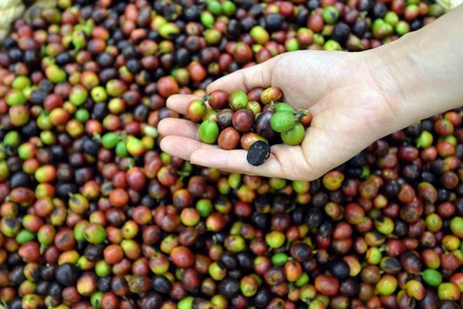 xử lý nước thải chế biến cà phê