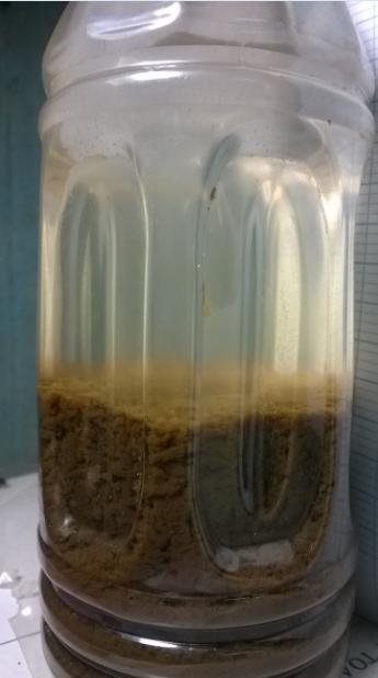 nuôi cấy bùn vi sinh - Công ty môi trường Bình Minh